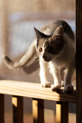 Frankie (brandon_gerringer) Tags: cat kitten pet petphotography canon tamron shadow