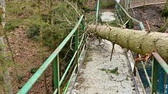 Sturmschaden Brücke Teufelküche (Sanseira) Tags: landsberg lech sturmschaden baum umgestürzt brücke teufelsküche