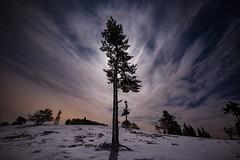 lonely tree (clemensgilles) Tags: longexposure bäume snow winter trees moonglow germany deutschland eifel