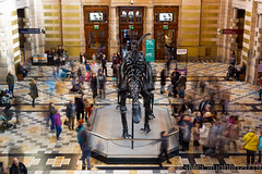 Dippy draws a crowd! (GWMcLaughlin) Tags: 50mm crowd stm dippy 50mm18stm canon kelvingrove longexposure january scotland museum 2019 dinosaur public ef 6d longexposureexposure diplodocus glasgow