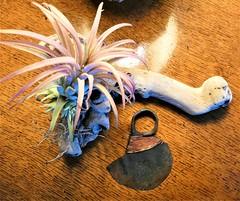 Very rare Turkana ngigolio or fighting ring knife from 1960s (ronmcbride66) Tags: ngigolio fightingringknife turkana turkanaweapon kenya copper oak airplant driftwood macro rarity coth coth5