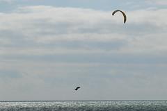 2018_08_15_0192 (EJ Bergin) Tags: sussex westsussex worthing beach seaside westworthing sea waves watersports kitesurfing kitesurfer seafront lewiscrathern