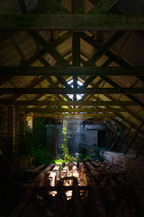 Reclaimed (richardsolway) Tags: building abandoned mine derelict old sun beam ray light roof tree nature green cornwall st austell vine ivy