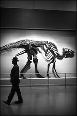 everybody walk the dinosaur (bostankorkulugu) Tags: bones light hat silhouette walk man fossil skeleton dinosaur dino northamerica america canada ontario toronto royalontariomuseum rom