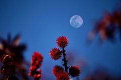 La primera luna de Primavera. (angelalonso57) Tags: canon eos 6d 70200mm f28 dg os hsm | sports 018 ƒ28 1880 mm 11600 100 luna moon llena shot composición tono encuadre