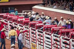 Calgary Stampede 2016 (tallhuskymike) Tags: calgary stampede event calgarystampede cowboy cowgirl horse 2016 rodeo outdoors greatestoutdoorshow prorodeo alberta