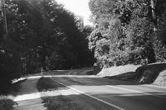 Mount Dandenong Tourist Road (8) (Matthew Paul Argall) Tags: spartus35fmodel400 35mmfilm kentmerepan100 100isofilm blackandwhite blackandwhitefilm road street mountdandenongtouristroad