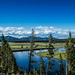 Yellowstone NP - Wyoming / USA