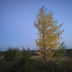 Находим место для палаток, разводим костер. Желтые листья напоминают нам о том, что не за горами матушка осень. На небе появляются первые звезды. Горит костер, мы вспоминаем былое, не загадываем на будущее, живем настоящим.