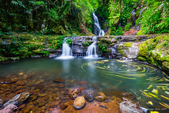 Elebana Falls (NettyA) Tags: australia elebanafalls janetteasche lamingtonnationalpark oreillys qld queensland sonya7r green rainforest rocks scenicrim swirlingleaves swirls waterfall luminar