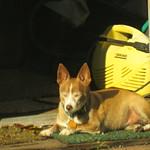 Quita dog sunning 1 2 19 thumbnail