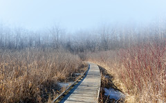 Destination Unknown (John Westrock) Tags: path nature landscape fog foggy wisconsin boardwalk marsh monches midwest canoneos5dmarkiii canonef2470mmf28lusm