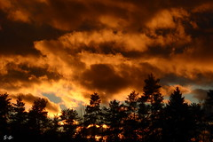 when the sun goes down (S.Garten) Tags: thebeautyofnature magicmoments ilovenature like fire sun sunbeams trees nature landscapes sky heaven golden blue black evening sunset