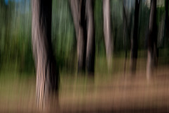 In the Magic Forest (NathalieSt) Tags: icm intentionalcameramovement