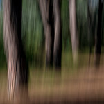 In the Magic Forest thumbnail