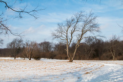 (Jeremy Whiting) Tags: stony creek metropark michigan macomb county detroit metro snow winter nature wildlife trees bark fungi mushrooms lichen barren february 2019 color canon digital outdoors outdoor hike trail