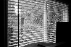My bedroom window, 2 (Matthew Paul Argall) Tags: canonsnappy20 fixedfocus focusfree 35mmfilm blackandwhite blackandwhitefilm kentmere100 100isofilm window blinds