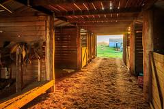 Sunlight peeping through the Barn (travis.daldy) Tags: barn dirt farm grass nsw newsouthwales saddles sunrise timber sun