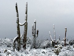 legend-trails-1902220720 (nagerfran) Tags: cactus winter desert storm snow cold freeze arizona scottsdale tontonationalforest