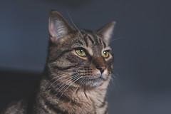 IMG_5335-3 (iocatco) Tags: cat kitten cats sony a7