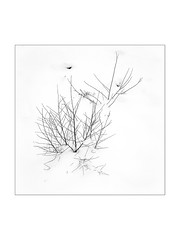 Neige (philippeprovost1) Tags: snow winter neige hiver blanc white branch branches taillis