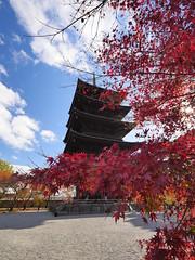 東寺 五重塔 (Eiki Wang) Tags: kyoto 京都 toji 東寺