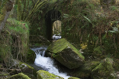 Galicia y sus ríos...!!! (Camelia-5) Tags: coruña río agua verdes
