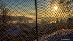 """Caught in the net - Võrku püütud ! (Igor """"Ixa"""" Nael) Tags: päike sun sunset sunrise net aed aiavõrk viljandijärv viljandi talv winter snow frost frosty puud tree linn city canon päikeseloojang"""