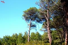 Flora mediterranea - Mediterranean flora (rocco944) Tags: rocco944 taranto puglia italy leporano zonagandoli exbatteriacattaneo canoneos650d