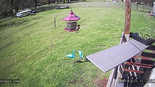 (Roberts Texas Bird Feeder Cam Profile Picture