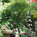 Buddhas meditating, statues, lotus fountain, Japanese lantern, pink flowers, Japanese maple, willow, Tibetan prayer flags, bamboo fence, Broadview, Seattle, Washington, USA