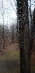screen scene (bidutashjian) Tags: nikon d3500 raindrops screen winter fog trees nature outdoors mist rain water wet door doorway rainy misty foggy forest woods bidutashjian color colors