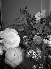 harada-flowers-87 (annie harada) Tags: flowers hana blumen fleurs bouquet noir et blanc black white