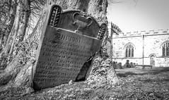 When trees take over . . (wayman2011) Tags: colinhart fujifilm18mmf2 fujifilmxt1 lightroom5 wayman2011 bw mono rural churches graveyards gravestones trees pennines dales teesdale barnardcastle countydurham uk