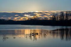 Morning at Saunders Pond (judymtomlinson) Tags: scenic landscape waterscape trees pond sky clouds sunrise reflection morning spring saunderspond londonontariocanada nikond5200