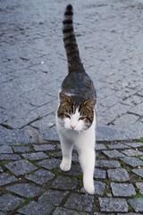 Dolmabahçe area cat (Insher) Tags: dolmabahçe cat istanbul turkey
