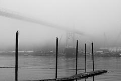 Dock and St John's Bridge (anthonypond) Tags: 50mmsummilux bw cathedralpark dxo leicam10 portland stjohnsbridge