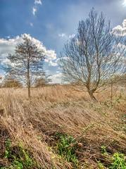 Radipole No11 - Copy (iankellybn26dj) Tags: uk england dorset weymouth nature landscape rspb spring sun sunlight marshes sky clouds