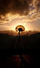 My Morhers Day Wish (Michelle O'Connell Photography) Tags: drumchapel glasgow spring sunsetphotography silhouettephotography silhouette dandelion dandelionseed weed flower springsunset sunbeam lensflare mobileshot drumchapellifesofar skyporn skylovers michelleoconnellphotography mothersday2019
