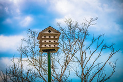 bIrDhOuSe (A Great Capture) Tags: agreatcapture agc wwwagreatcapturecom adjm ash2276 ashleylduffus ald mobilejay jamesmitchell toronto on ontario canada canadian photographer northamerica torontoexplore spring springtime printemps 2018 birdhouse trees sky highpark moody nature natur naturaleza natura naturephotography naturethroughthelens urban outdoors eos digital dslr lens canon 70d sigma 1750mm outdoor outside vibrant colorful cheerful vivid bright clouds cloudy