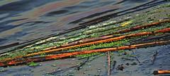 Laguna Nahuel Ruca . (Aprehendiz-Ana Lía) Tags: flickr nikon agua water laguna nahuelruca abstracto arte imagen argentina verde bañado juncos nature naturaleza analialarroude color multicolor