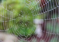 Trap (Manuele.Sansica) Tags: ragnatela trap trappola spider