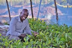 Cashew nurseryman, Benin. Photo: Joseph Ahissou, Technoserve (USAIDAgrilinks) Tags: agriculturalproductivity benin cashews nursery marketstrade