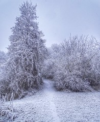 Winter persists (v o y a g e u r) Tags: naturaleza natura nature sony chemin voie path blanc white arbres arboles trees frozen frost neige snow hiver inverno winter