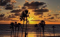 Sunset 18-2-7-19 (rod1691) Tags: oceanside california palms sunset ocean beach