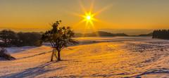 Winterstimmung im Sonnenuntergang (oblakkurt) Tags: winter sonnenuntergang baum schnee winterstimmung landschaft sonne