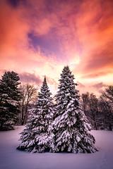 When the Clouds Break (Nicholas Erwin) Tags: winter snow landscape tree sunset sky clouds warm goldenhour beautiful outside backyard nature naturephotography colorful pretty waterbury waterburycenter vermont vt unitedstatesofamerica usa america fujifilmxt2 fujixt2 xf1024 xf1024mmf4rois fuji1024 fav10 fav25 fav50