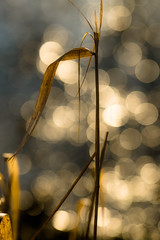 Whispering grass (tonguedevil) Tags: outdoor outside countryside winter pond water reflections bokeh grass colour leaves light shadows sunlight nature