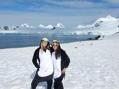 Hot Penguins, Elephant Island (Mulligan Stu) Tags: penguins hotpenguins antarctica elephantisland antarcticpeninsula chinstrappenguin