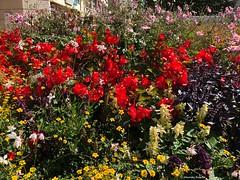 bouquet-urbain© (alexandrarougeron) Tags: photo alexandra rougeron fleur plante couleur paris ville urbain flickr